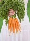 О пользе моркови известно не все