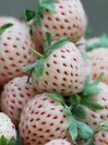 Уникальная ягода: клубника со вкусом ананаса